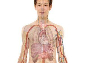 Bağ Doku Hastalıkları